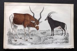 Goldsmith 1850s Hand Col Print. Addax Antelope. Sable Antelope 02.